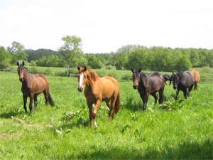 Für ausreichend Auslauf ist bei unseren Pferden stets gesorgt