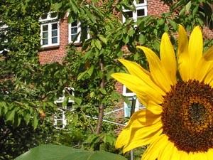 Bäume, Sträucher und Blumen bestimmen das Erscheinungsbild unseres Hofes